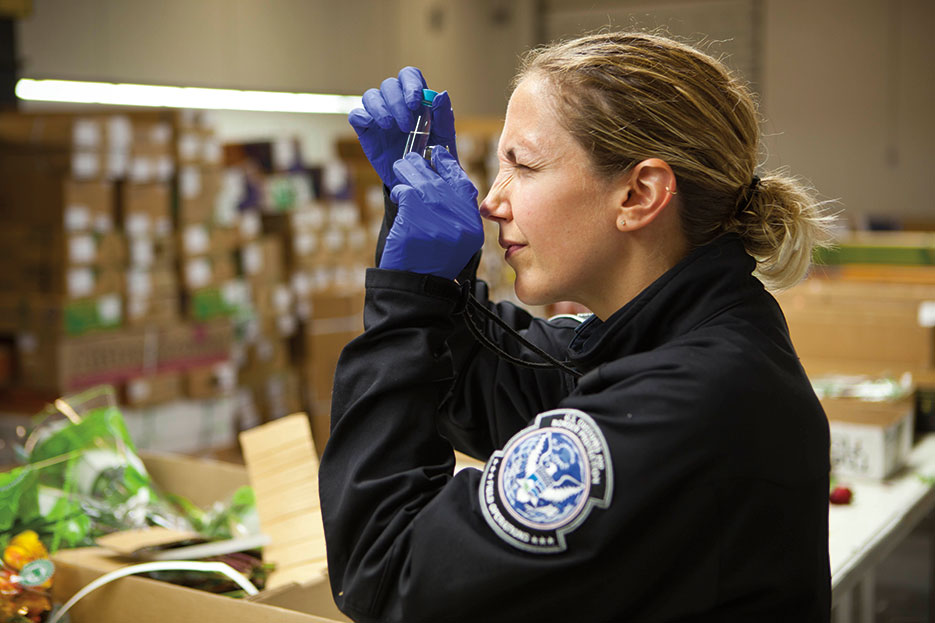 U.S. Customs and Border Protection agricultural specialists inspect millions of Valentine's Day flowers annually for pests at Port of Miami's cargo terminal (U.S. Customs and Border Patrol/James Tourtellotte)